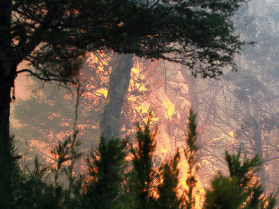 Разбился вертолет, тушивший лесные пожары в Испании