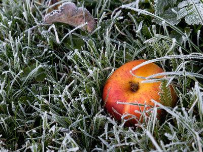 В выходные в Центральную Россию придет зима