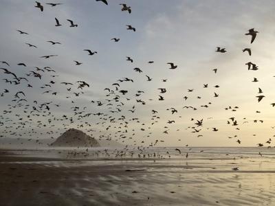 Астероид поспособствовал развитию всех современных птиц