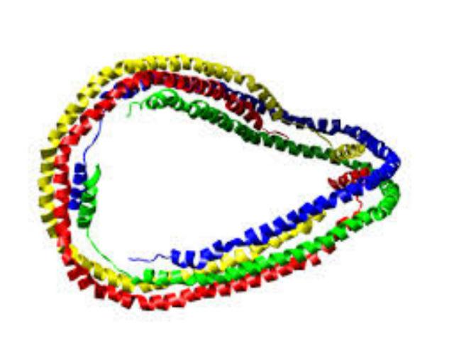 Алипопротеин — ген, отвечающий за транспорт холестерина (иллюстрация Wikimedia Commons).