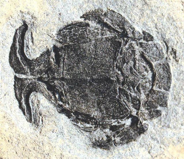 Окаменелые останки древнего существа (фото Roger Jones, London, UK).