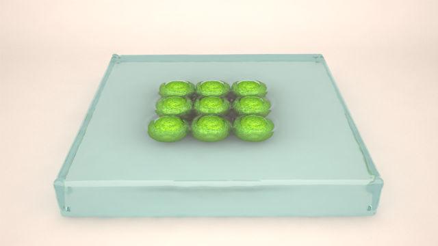 Биогель удерживает тканевые сфероиды вместе и создаёт для них благоприятную среду (фото 3D Bioprinting Solutions).