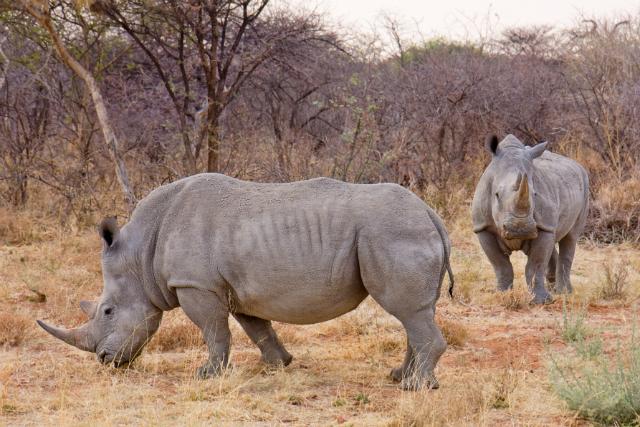 Человечество ответственно за вымирания многих видов редких животных. Вероятно, антропогенное воздействие приведёт к шестому массовому вымиранию на нашей планете