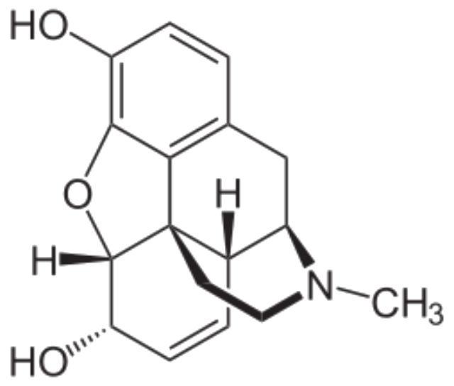По своим свойствам опиоидные пептиды кофе схожи с морфином (иллюстрация Wikimedia Commons).