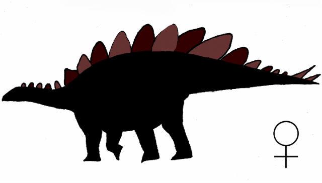 Так, по мнению Эвана Сэйтты, выглядела самка стегозавра (фото Evan Saitta).