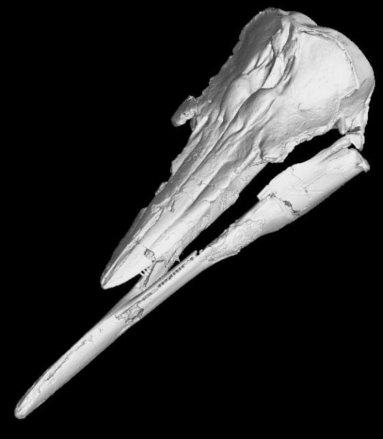 Череп и челюсти древнего животного (иллюстрация Rachel Racicot).