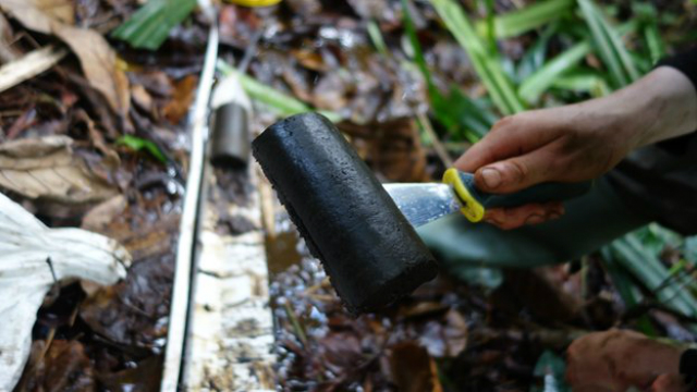 Исследовательская группа взяла образцы торфа, чтобы отправить их в Великобританию для исследования (фото Simon Lewis).