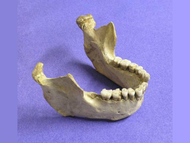 Анализ останков и каменных артефактов уточнил сроки исчезновения неандертальцев (фото Thomas Higham).