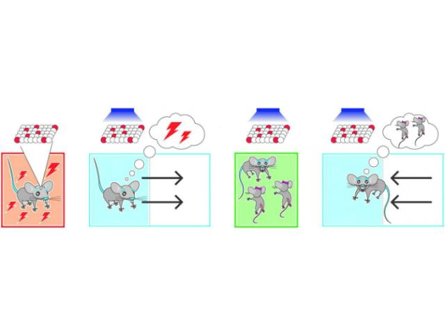 Схематическое изображение хода эксперимента (иллюстрация Collective Nextand Roger Redondo).