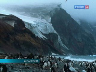 В Антарктике появится крупнейший в мире морской заповедник