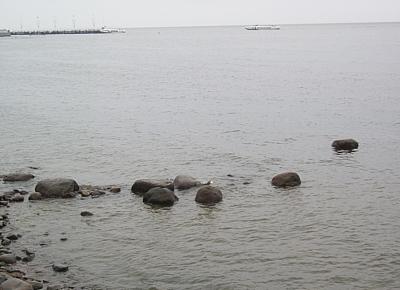 ВОЗ попросила МОК проверить воду в заливе Гуанабара, где пройдут соревнования Олимпиады-2016