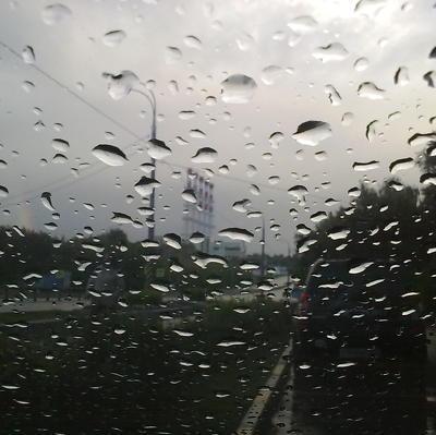 Порядка 40 деревьев повалено в Москве в пятницу из-за ветра и ливня