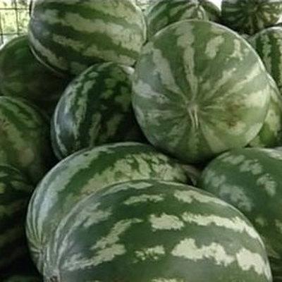 Необычные арбузы с оранжевой окраской мякоти начали выращивать в Астраханской области