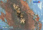 Мухи превращают пчел в ночных зомби