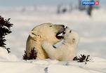 Таинственные земли Арктики и Антарктики в самом центре Москвы