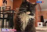 Интернет-зависимым помогут кошки