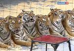 Смотр лучших циркачей мира проходит в Москве