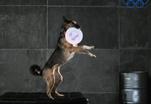 Главный хватательный орган собак