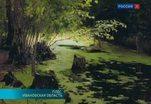 Пять полотен Исаака Левитана похищены из музея-заповедника в Плесе