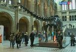В Великобритании меняют диплодока на кита