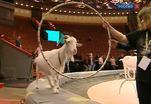 Большой Московский цирк устроил мастер-класс для журналистов