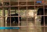 Эвакуация животных в Уссурийске проходит под контролем ветеринаров и представителей зоопарка