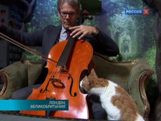 Американский виолончелист представил первый альбом музыки для кошек и котов