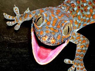 Лапки геккона