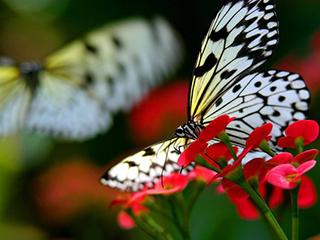 Война бабочек и летучих мышей