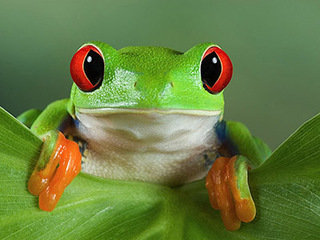 Зрение у лягушек