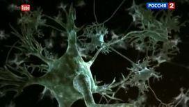 Японские нейробиологи научились