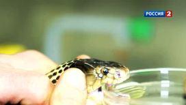Зачем ученым доить змею?
