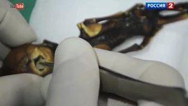 ДНК мумии, робот-канатоходец, фаллос на Марсе
