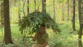 Баженов мастерит из елки камуфляжный зонт