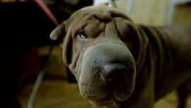Треть всех домашних животных страдают аллергией
