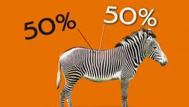 Зоологи рассказали правду о зебрах